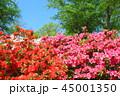 西山公園 ツツジ 花の写真 45001350