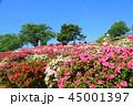 西山公園 ツツジ 花の写真 45001397