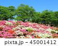西山公園 ツツジ 風景の写真 45001412