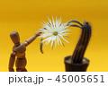 さぼてん サボテン 仙人掌の写真 45005651
