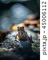 The common frog 45006112
