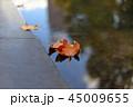 水面の落ち葉 45009655