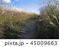 秋のススキの道 45009663