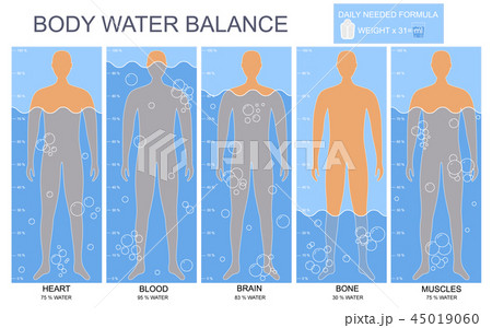 Cartoon Body and Water Chart Infographics Card Poster. Vector 45019060