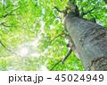 新緑 木 樹木の写真 45024949