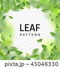 緑色 リーフ 葉のイラスト 45046330