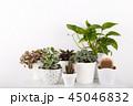 植物 鉢 観葉植物の写真 45046832