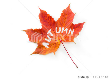 The word autumn, carved on a maple leaf. 45048238