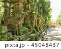 奈良 春日大社 鹿の写真 45048437