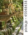 奈良 春日大社 鹿の写真 45048438