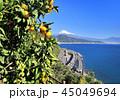 富士山 世界文化遺産 さった峠の写真 45049694