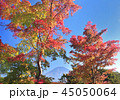 風景 富士山 世界遺産の写真 45050064