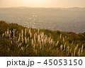 若草山 秋 奈良市の写真 45053150
