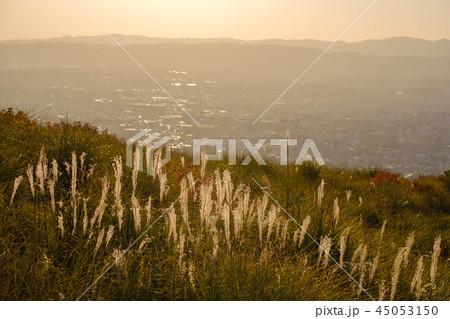 若草山のススキと奈良の町 45053150
