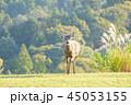 鹿 若草山 動物の写真 45053155