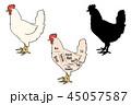 鶏 シルエット 白バックのイラスト 45057587
