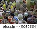 さぼてん サボテン 仙人掌の写真 45060664