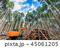 杉 森林 林業の写真 45061205