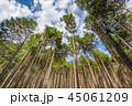 杉 森 林の写真 45061209