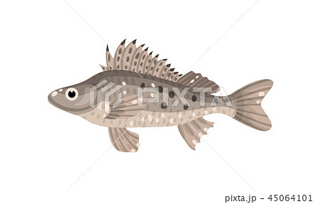 Ruffe fish with spiny fins. Predatory marine animal. Sea creature. Underwater life theme. Flat 45064101