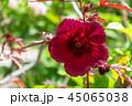 花 クローズアップ フラワーの写真 45065038