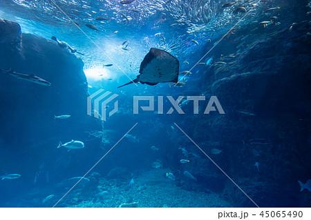 aquarium 45065490