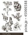 ベクトル イラスト 森林のイラスト 45066588