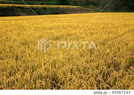秋の田園風景 45067245