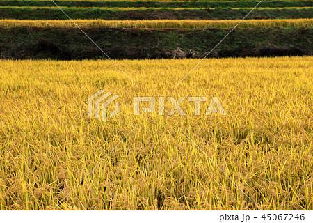 秋の田園風景 45067246