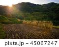 米 日本 田畑の写真 45067247