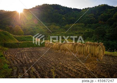 秋の田園風景 45067247