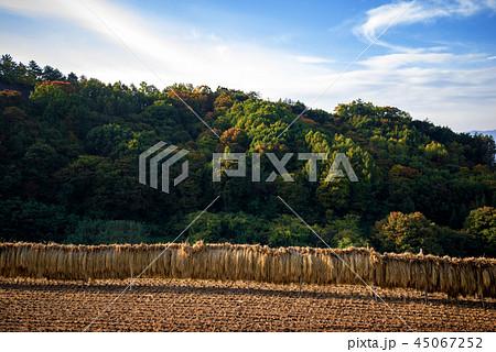 秋の田園風景 45067252