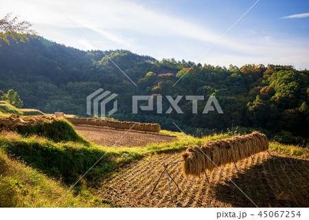 秋の田園風景 45067254
