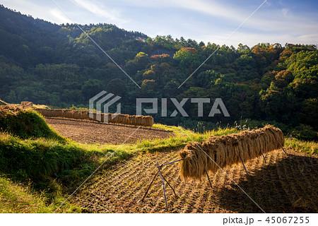 秋の田園風景 45067255