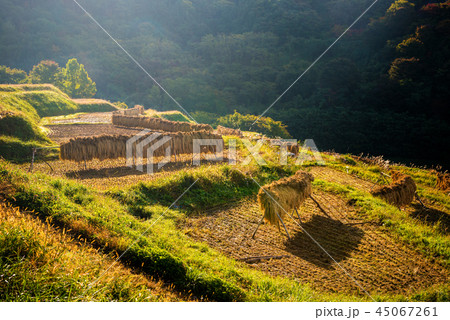 秋の田園風景 45067261