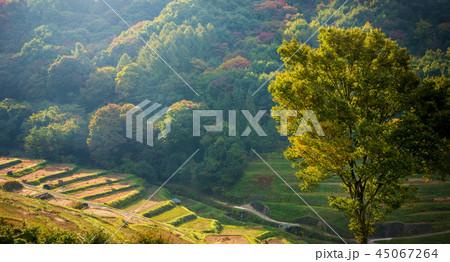 秋の田園風景 45067264