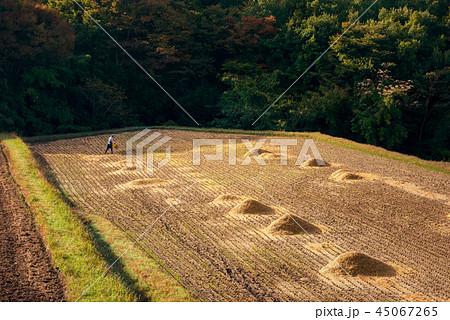 秋の田園風景 45067265