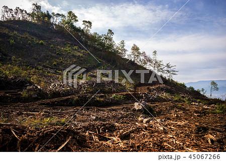 森林伐採 45067266