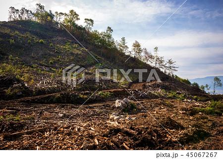 森林伐採 45067267