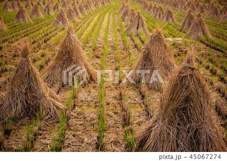 秋の田園風景 45067274