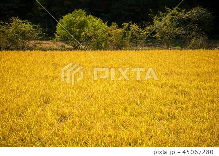 秋の田園風景 45067280