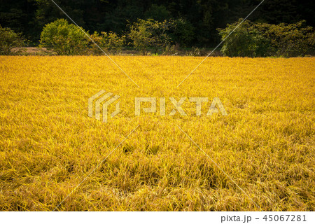 秋の田園風景 45067281