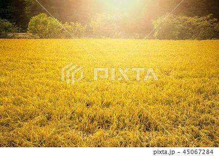 秋の田園風景 45067284