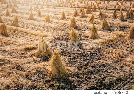 秋の田園風景 45067289