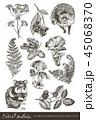 ベクトル イラスト 森林のイラスト 45068370