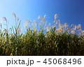 秋 青空 晴れの写真 45068496