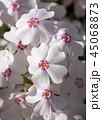 花 植物 クローズアップの写真 45068873