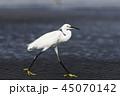 鷺 白鷺 鳥の写真 45070142