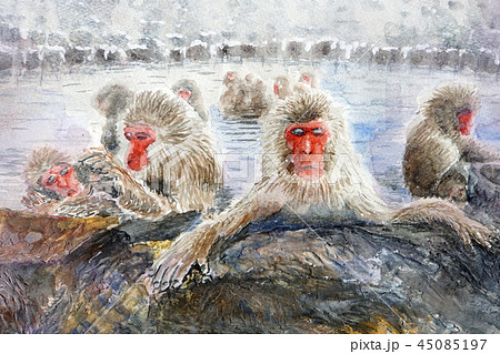 野猿公苑 温泉猿 地獄谷 温泉に入る猿 45085197