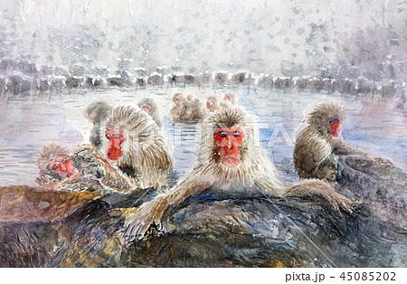 野猿公苑 温泉猿 地獄谷 温泉に入る猿 45085202